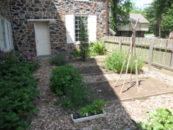 Visitors enjoyed our kitchen garden on the way..